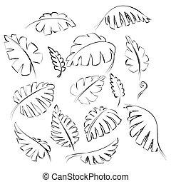 egzotyczny, liście, doodle, zaprojektujcie element