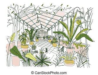 egzotyczny, rośliny, rys, pełny, ogród, garnki, oranżeria, windows., soczysty, drzewa, tropikalny, panoramiczny, wektor, foliage., kulturalny, wewnętrzny, freehand, botaniczny rysunek, rozwój, illustration.