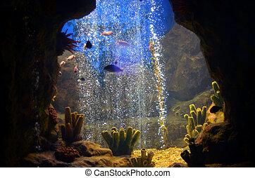 egzotyczny, ryby