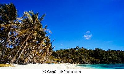 egzotyczny, tropikalna plaża