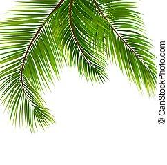 egzotyczny, tropikalny, liście, dłoń, tło
