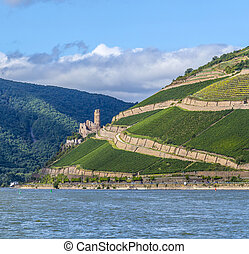 Ehrenfels castle in the vineyards of the Rhine valley near...