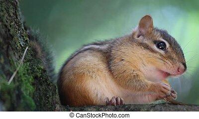 eichhörnchen, essende, auf, der, baum