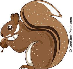 eichhörnchen, freigestellt