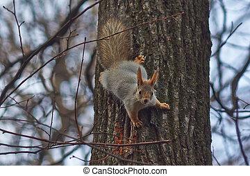 eichhörnchen, in, a, wald, erhält, essen.