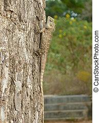 Eidechse am Baumstamm