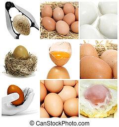 eier, collage