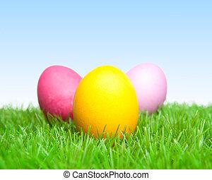 eier, drei, dekoriert, gras, ostern, gänseblümchen