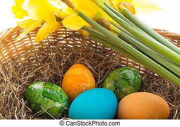 eier, farbig
