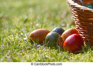 Eier, gras, Ostern, Dekoriert