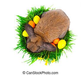 Eier, hintergrund, kanninchen, korb, weißes, Ostern