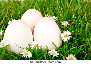 eier, in, der, gras, mit, blume