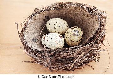 eier, in, der, nest