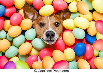 Eier, Ostern, kaninchen, hund