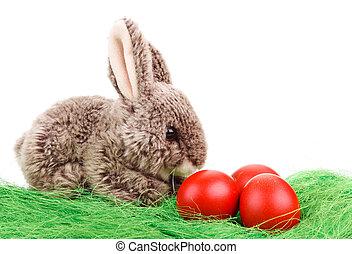 Eier, Ostern, kaninchen