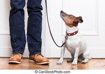 eigenaar, dog