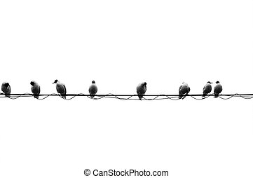Eight Birds On A Wire