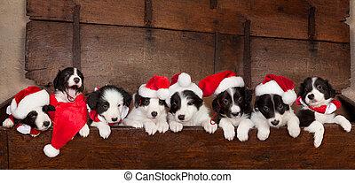 Eight christmas puppies