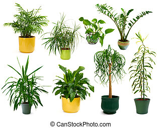 Collection of eight different studio-isolated shots of gorgeous indoor plants