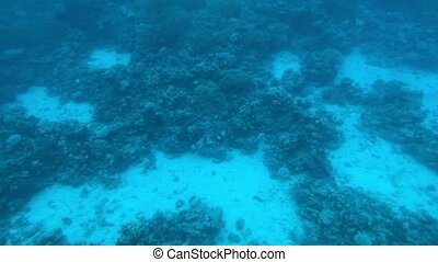 Eilat, Israel - at the depths of the Red Sea through the porthole part 11 4K