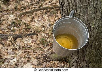 eimer, gebraucht, sammeln, saft, von, ahorn, bäume, zu, erzeugen, ahornsirup, in, quebec.