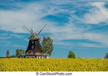 ein, altes , windmühle, steht, auf, a, canola, feld
