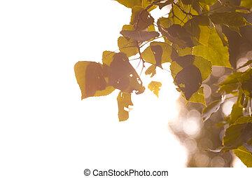 Sommergefühle - Ein Blick durch die Blätter, am Rand...