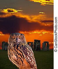 ein, eule, und, der, geheimnis, stonehenge