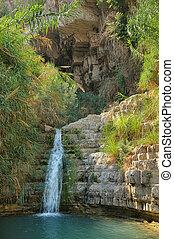 Ein Gedi Nature Reserve - Ein Gedi nature reserve, coast of...