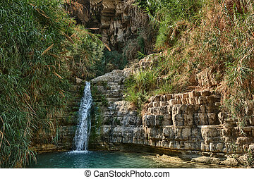 Ein Gedi Nature Reserve off the coast of the Dead Sea -...