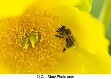 ein, insekt, sammeln, nektar, in, a, bloom.
