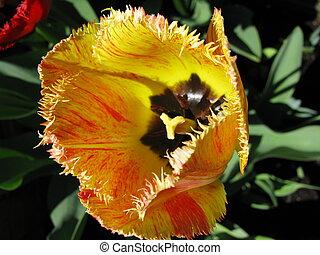 ein Siefmuetterchen auf dem Balkon, one colored Flower on...