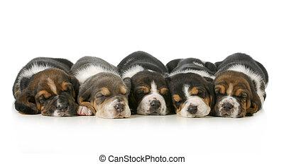 eingeschlafen, hundebabys