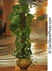eingetopft hat, grünpflanze