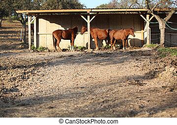 einige, pferd, unter, der, unterstand