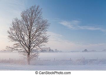 eins, eisig, baum, stehende , vor, a, zaun, auf, a, feld, mit, schnee