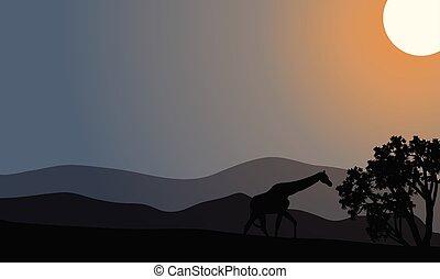 eins, silhouette, hügel, zebra