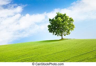 einsam, baum, in, schöne , landschaftsbild