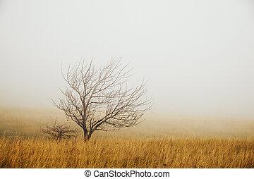 einsam, baum, nebel
