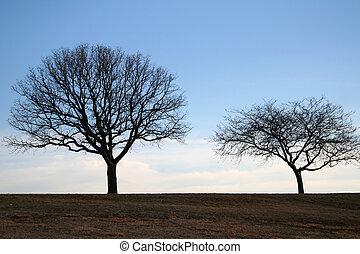 einsam, park, bäume