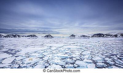 eisbã¤r, spitsbergen