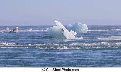 eisberge, schwimmend, auf, der, nord atlantic,...
