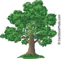 ek, gräs, träd, grön