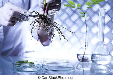 ekologi, laboratorium, experimentera