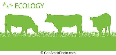 ekologi, organisk, vektor, bakgrund, nötkreatur, jordbruk,...