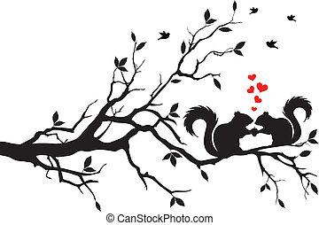 ekorrar, på, träd