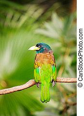 eksotisk fugl, branch, farverig, siddende