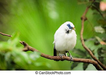 eksotiske, hvid fugl, branch