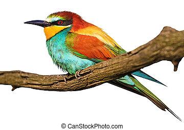 eksotiske, hvid, isoleret, branch, fugl