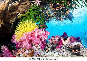 eksotiske, koral rev